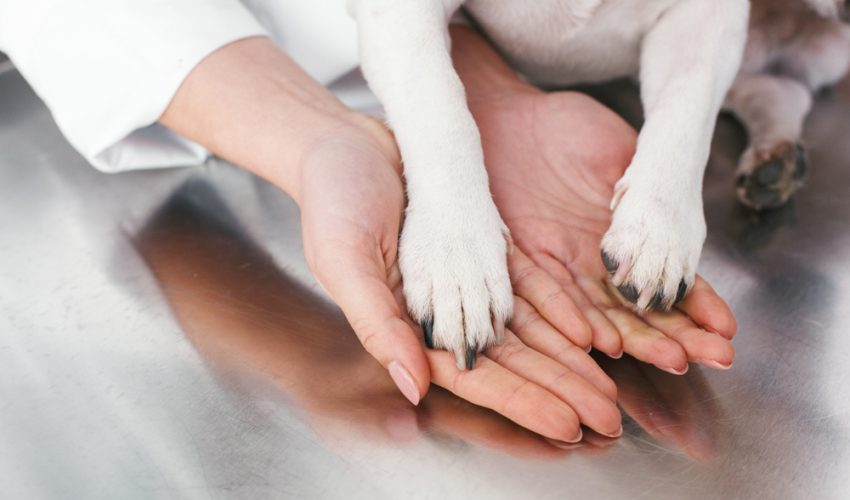 犬 動物病院